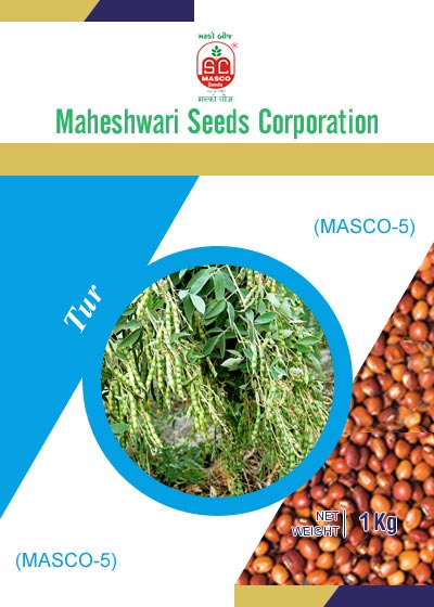 Masco-5 Tur Seeds