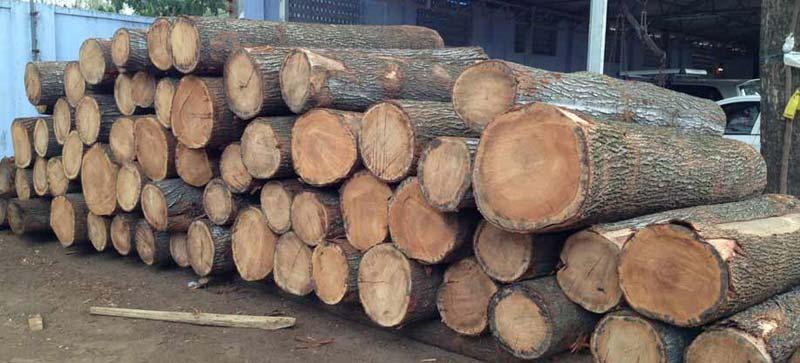 Oak Wood Logs ~ Silver oak wood logs round exporters