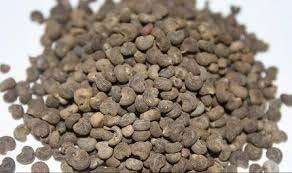 Musk Seeds