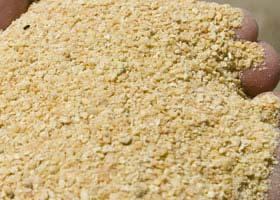 Organic Soybean Meal