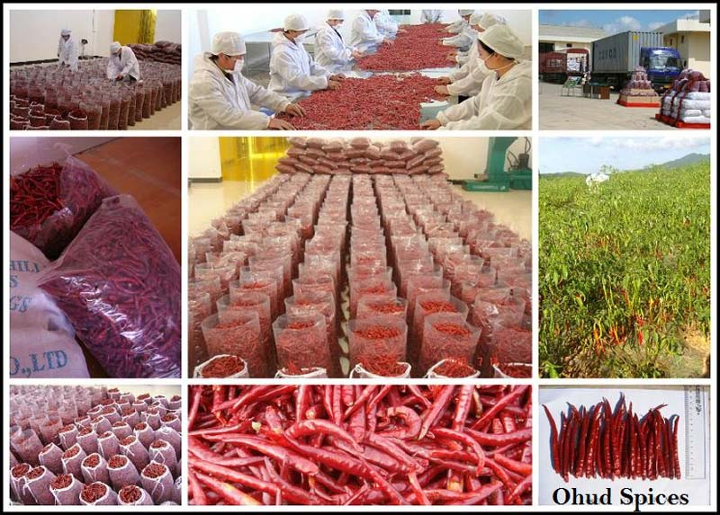 Dried Red Chilli