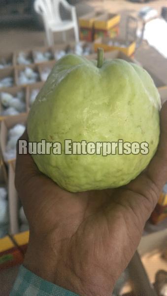 Fresh Guava 05