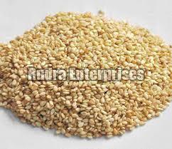 Sesame Seeds 07