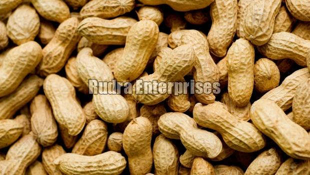 Shelled Groundnut 01