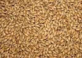 Barley Seeds