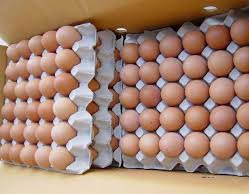 Fertile Chicken Eggs
