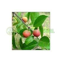 Salacia Reticulata Extract