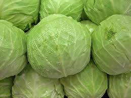 Fresh Cabbage 01