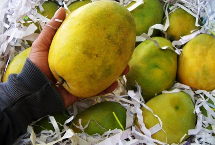 Rajapuri Mango 01