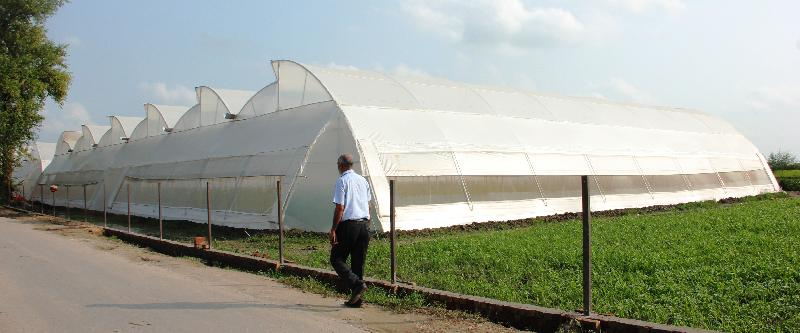 Polyhouse Installation Services In Jalandhar Greenhouse
