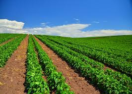 Horticulture Farming Consultancy 01