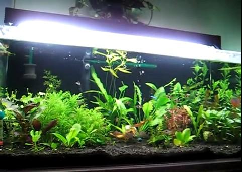 Planted Aquarium 02