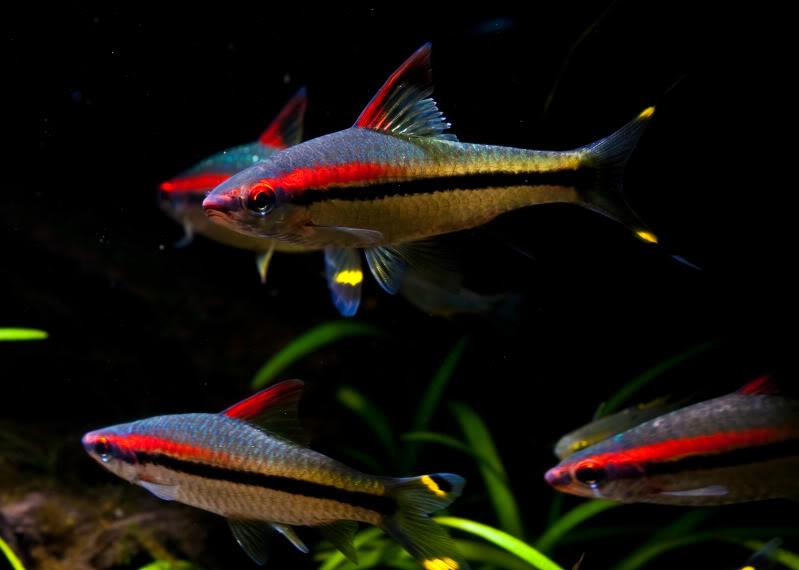 Planted Fish