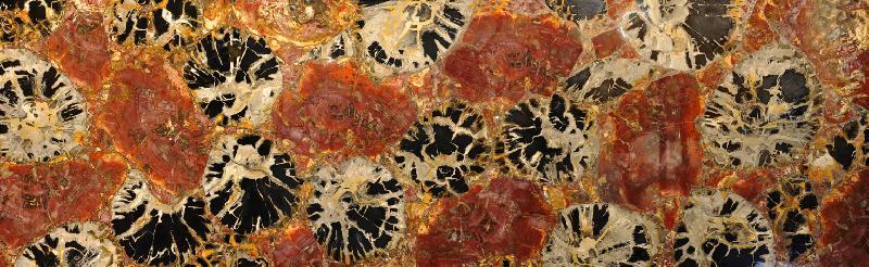 Petrified Wood Black & Red