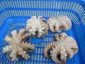 Frozen Octopus Whole 02
