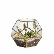 Glass terrarium glass for plant
