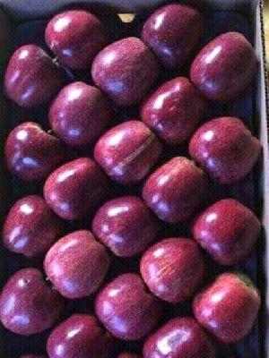 Apples Image 01