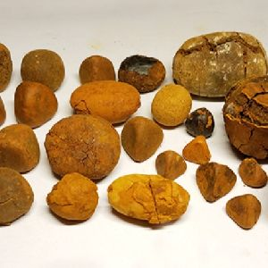 Ox Gallstones Cattle Gallstones Cow Gallstones