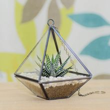Handblown glass terrarium