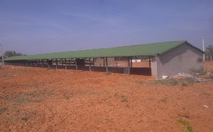 Poultry Shed Construction Services