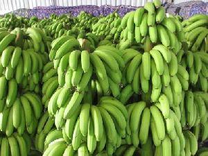 Fresh Cavendish Green Banana 02