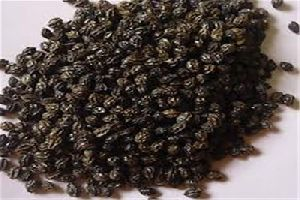 Red Lady 786 Papaya Seeds