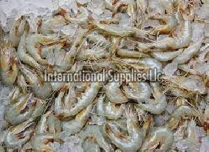 Fresh Shrimps Fish