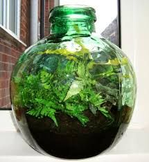 Terrarium Bottle Plants
