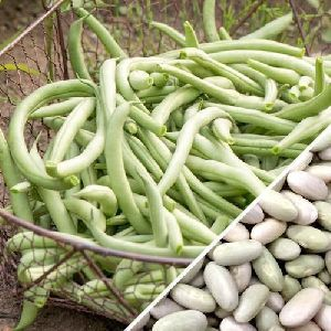 Green French Bean Seeds
