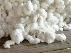 Pure Raw Cotton