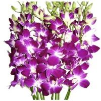 fresh orchids flower