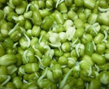 green mung sprouts