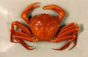 Frozen Red Crab