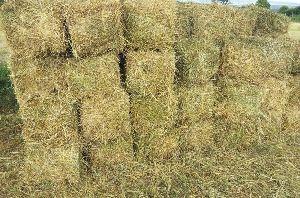 Alfalfa Hay 02
