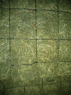 Alfalfa Hay 06