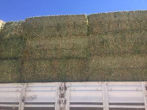 Alfalfa Hay 13