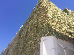 Alfalfa Hay 14