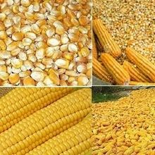 Yellow Corn Gluten Feed