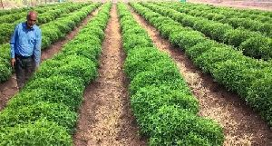 Herbal Farming Consultancy Services