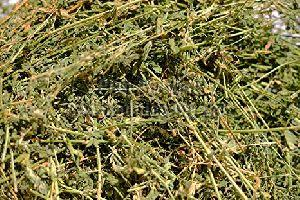 Alfalfa Hay Grass