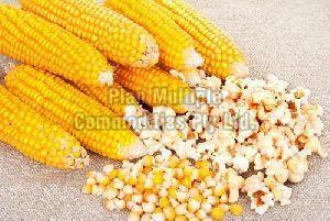 Popcorn Maize Seeds