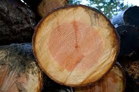 Douglas Fir Wood Logs