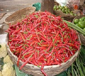 RED CHILLI Spices