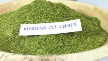 MORINGA CUT LEAVES