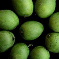 Chaunsa Mango Plant