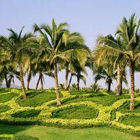 Landscape Garden Designing Services