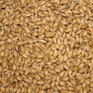 Cattel Feed Barley