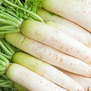 Fresh White Radish