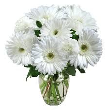 White Gerbera Flowers