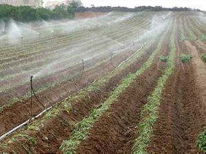 Sprinkler Irrigation Services